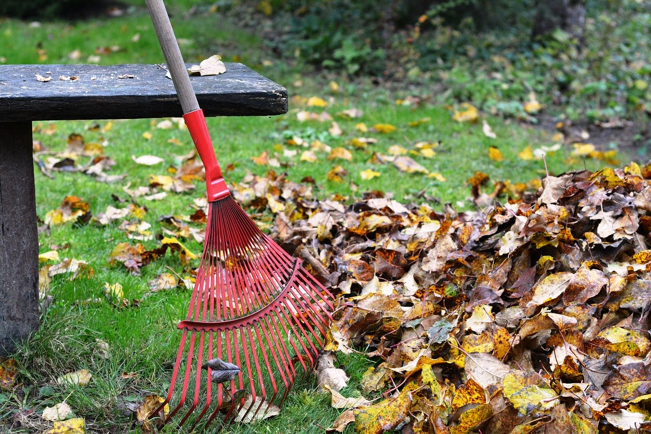 7 Essential Fall Lawn Care Tips for Virginia Lawns
