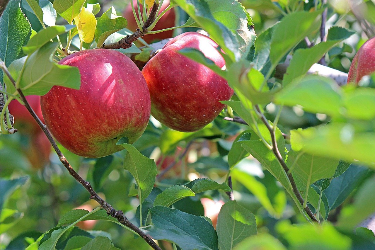 Read This Before Planting Fruit Trees in Your Yard