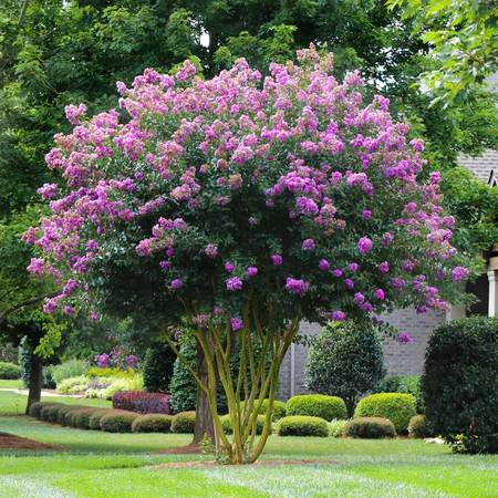 These 10 Trees are Perfect for Front Yards