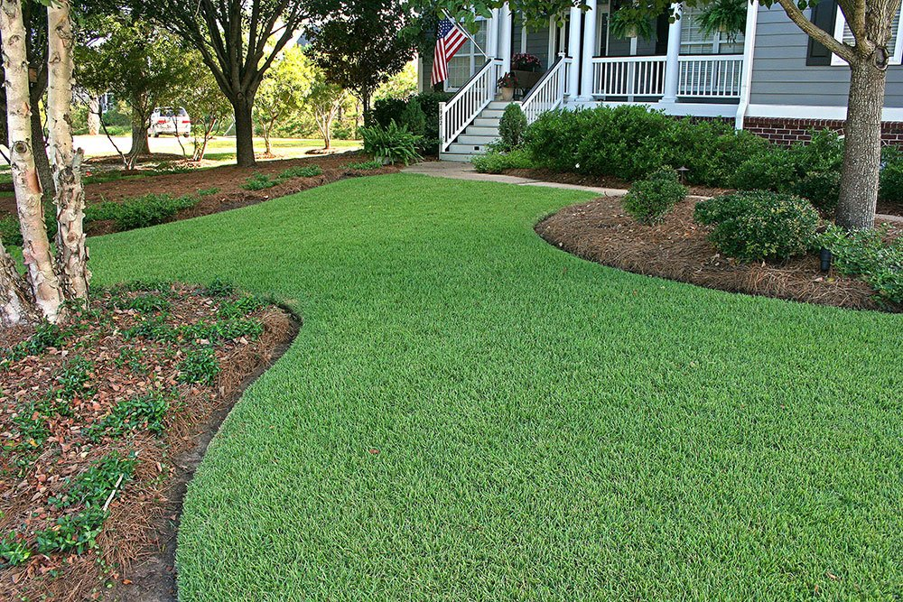 Best 5 Places to Buy Zoysia Grass Seed and Plugs Online