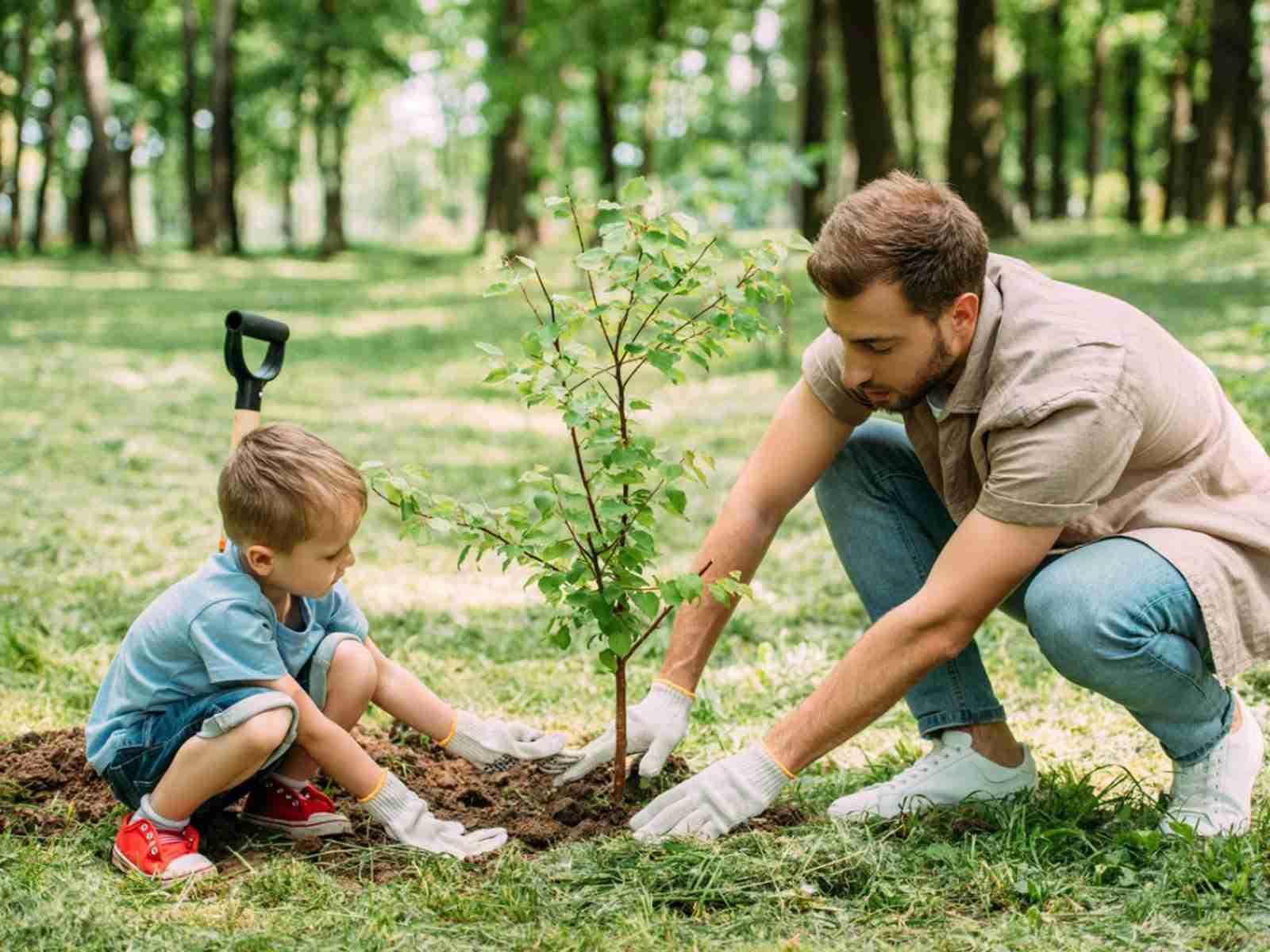 14 Memorial Tree Companies People Love