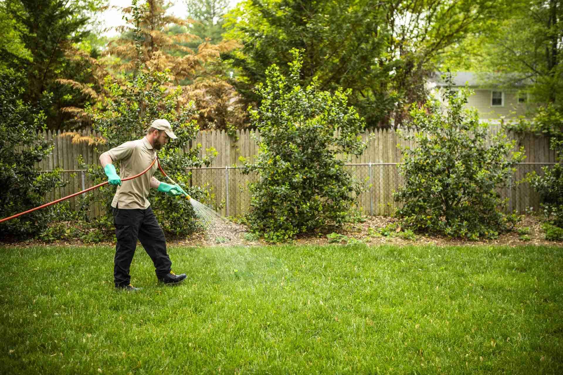 5 DIY Lawn Fertilizer Recipes that Actually Work